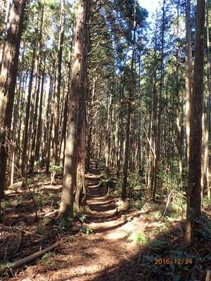 03高台山林相.JPG