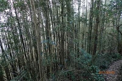 20竹.JPG