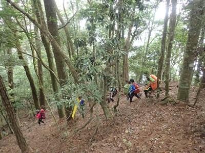 13串縮在森林中.JPG