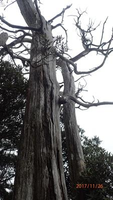 17夫妻樹.JPG