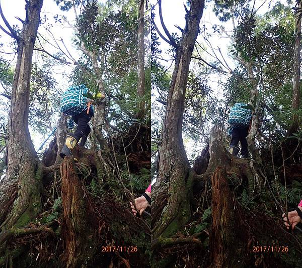 18爬山不是爬樹.jpg