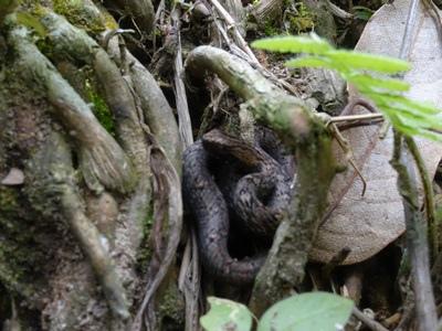 01蛇.JPG