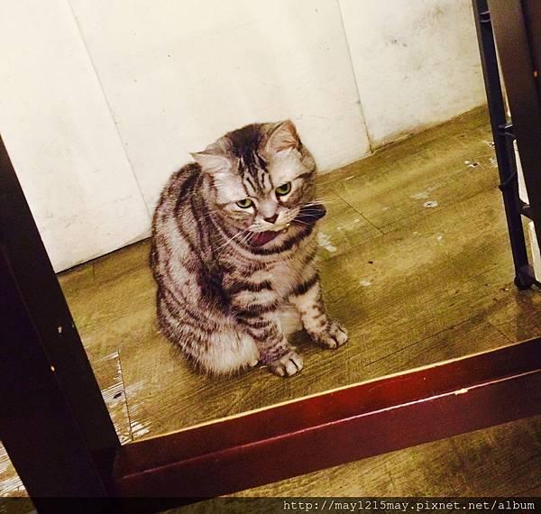 2-2  貓咪先生的朋友  捷運忠孝復興  東區  寵物.jpg