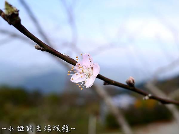 小妞的生活旅程10新竹五峰 賽夏有機農場 露營區 五星級.jpg
