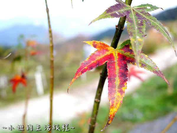 小妞的生活旅程11新竹五峰 賽夏有機農場 露營區 五星級.jpg