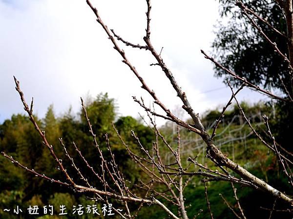 小妞的生活旅程19新竹五峰 賽夏有機農場 露營區 五星級.jpg