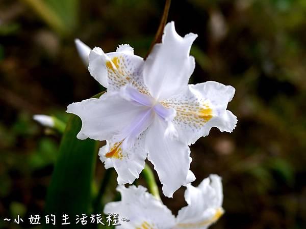 小妞的生活旅程20新竹五峰 賽夏有機農場 露營區 五星級.jpg