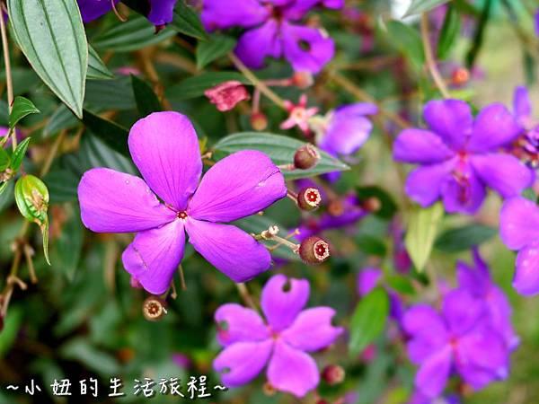 小妞的生活旅程24新竹五峰 賽夏有機農場 露營區 五星級.jpg