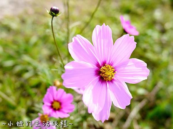 小妞的生活旅程28新竹五峰 賽夏有機農場 露營區 五星級.jpg