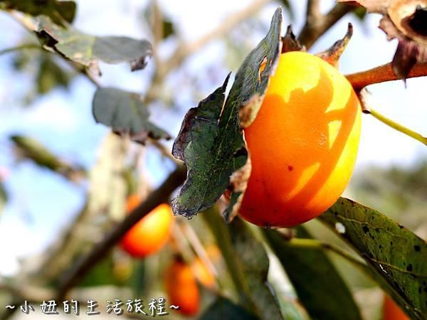小妞的生活旅程30新竹五峰 賽夏有機農場 露營區 五星級.jpg
