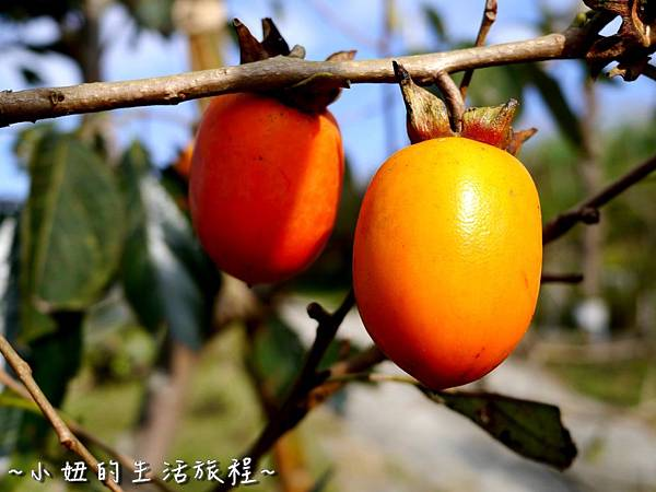 小妞的生活旅程31新竹五峰 賽夏有機農場 露營區 五星級.jpg