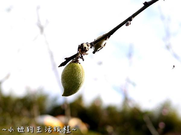 小妞的生活旅程32新竹五峰 賽夏有機農場 露營區 五星級.jpg