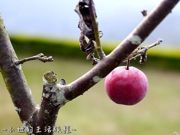 小妞的生活旅程36新竹五峰 賽夏有機農場 露營區 五星級.jpg