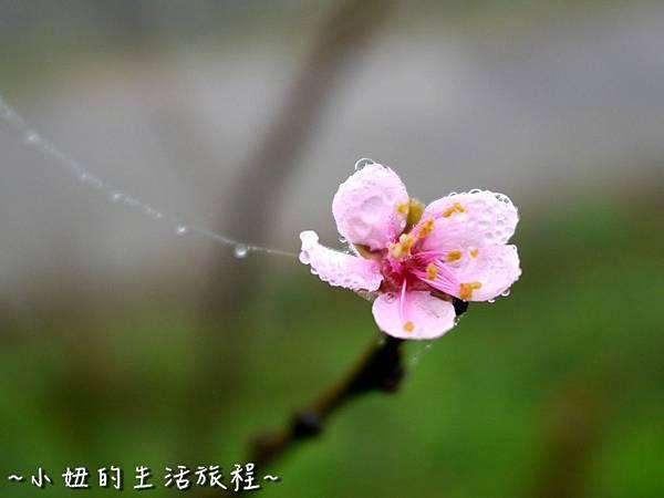 小妞的生活旅程41新竹五峰 賽夏有機農場 露營區 五星級 早晨 溫度.jpg