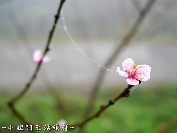小妞的生活旅程42新竹五峰 賽夏有機農場 露營區 五星級 早晨 溫度.jpg