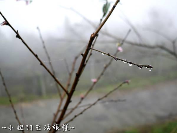 小妞的生活旅程43新竹五峰 賽夏有機農場 露營區 五星級 早晨 溫度.jpg