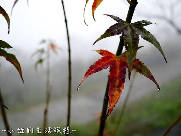 小妞的生活旅程44新竹五峰 賽夏有機農場 露營區 五星級 早晨 溫度.jpg
