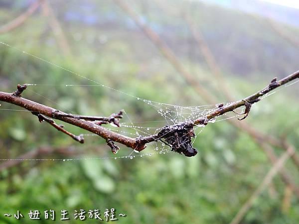 小妞的生活旅程46新竹五峰 賽夏有機農場 露營區 五星級 早晨 溫度.jpg