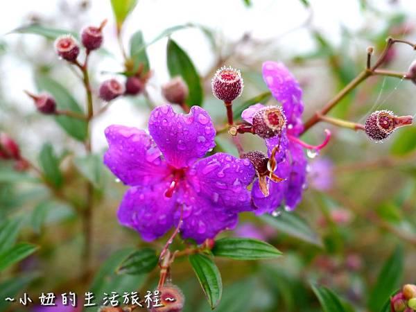 小妞的生活旅程47新竹五峰 賽夏有機農場 露營區 五星級 早晨 溫度.jpg
