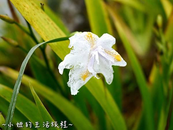 小妞的生活旅程49新竹五峰 賽夏有機農場 露營區 五星級 早晨 溫度.jpg