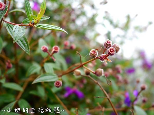 小妞的生活旅程50新竹五峰 賽夏有機農場 露營區 五星級 早晨 溫度.jpg
