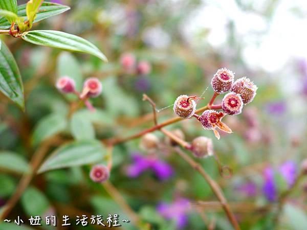 小妞的生活旅程51新竹五峰 賽夏有機農場 露營區 五星級 早晨 溫度.jpg
