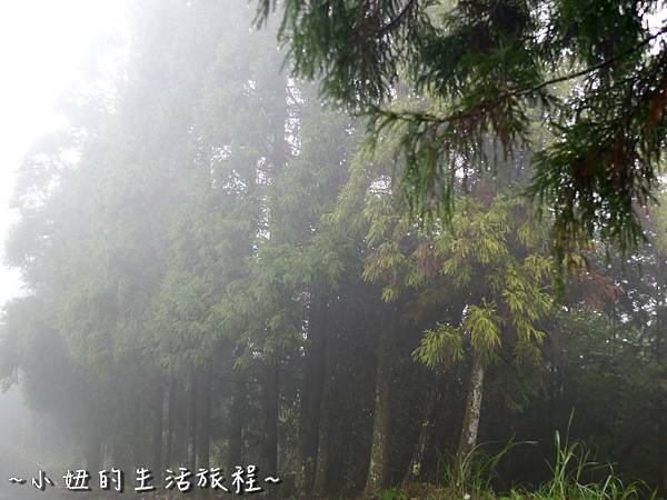 小妞的生活旅程54新竹五峰 賽夏有機農場 露營區 五星級 早晨 溫度.jpg