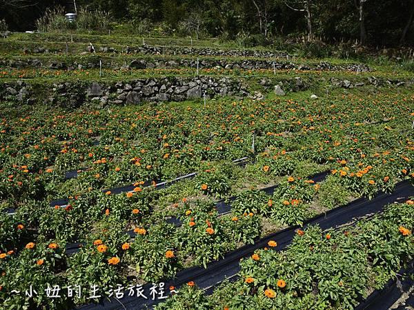 02親子DIY 新竹 那羅部落 景點 旅遊 香草  金盞花.jpg