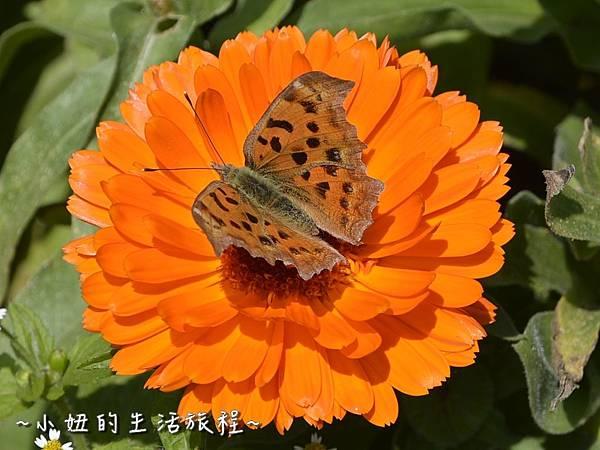 05親子DIY 新竹 那羅部落 景點 旅遊 香草  金盞花.jpg
