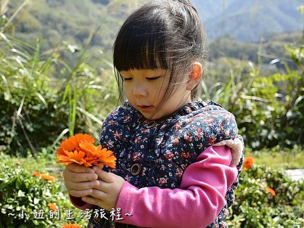 07親子DIY 新竹 那羅部落 景點 旅遊 香草  金盞花.jpg