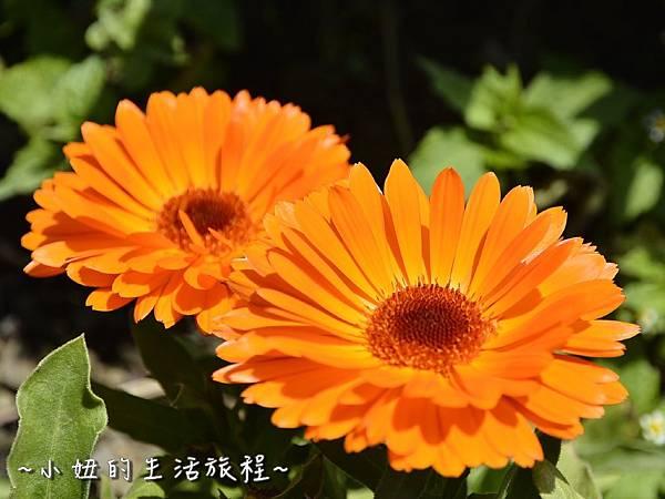 09親子DIY 新竹 那羅部落 景點 旅遊 香草  金盞花.jpg