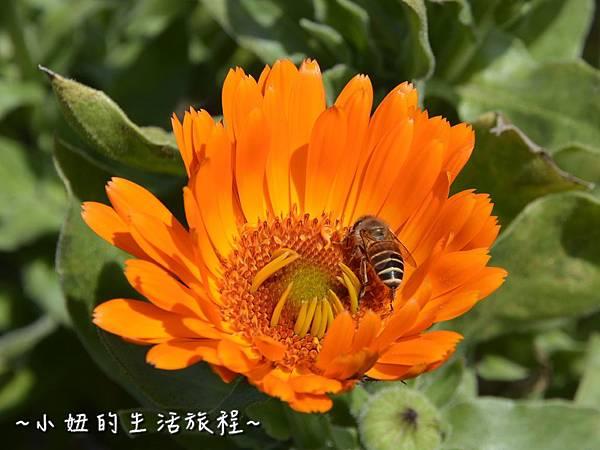 11親子DIY 新竹 那羅部落 景點 旅遊 香草  金盞花.jpg