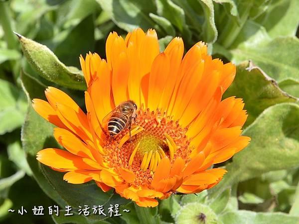 12親子DIY 新竹 那羅部落 景點 旅遊 香草  金盞花.jpg