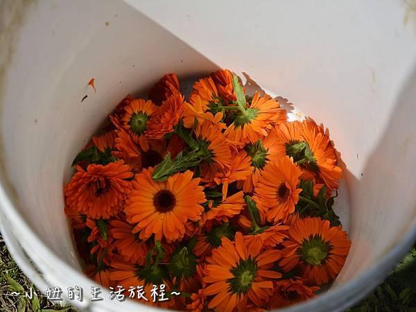 13親子DIY 新竹 那羅部落 景點 旅遊 香草  金盞花.jpg