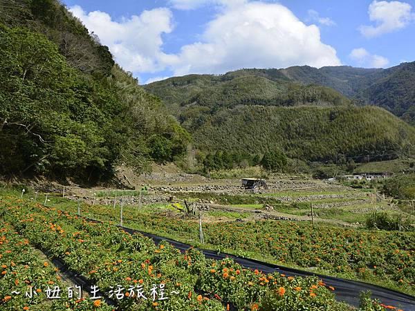 14親子DIY 新竹 那羅部落 景點 旅遊 香草  金盞花.jpg