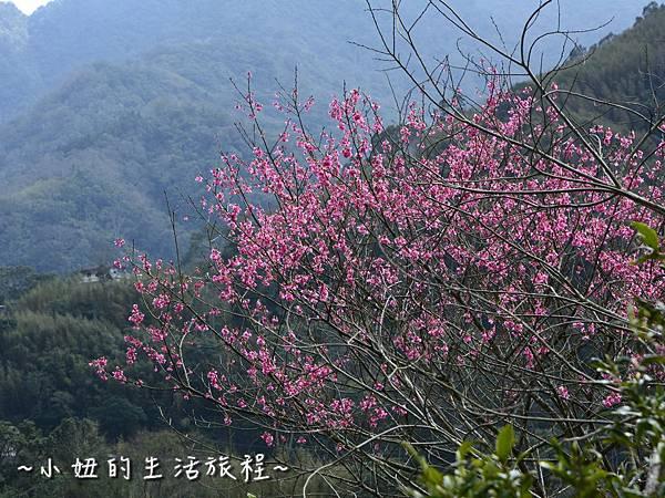 15親子DIY 新竹 那羅部落 景點 旅遊 香草  金盞花.jpg