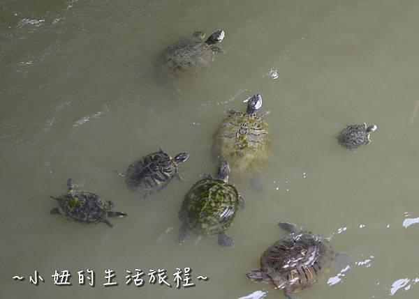 05新竹景點  麗水公園 免費 溜小孩 推薦 親子旅遊.jpg