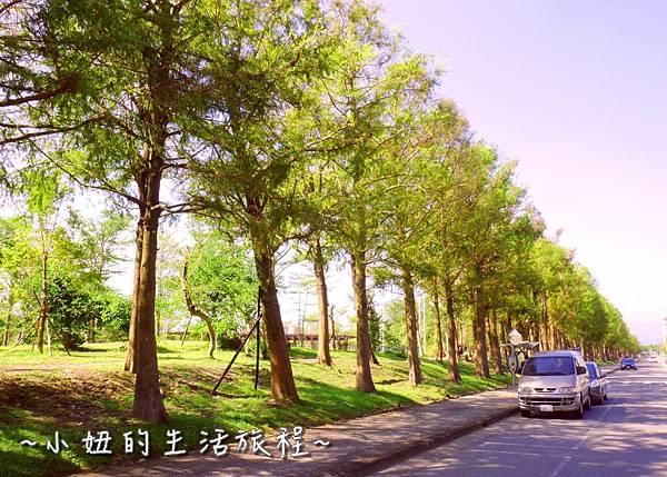 100 宜蘭落羽松 羅東運動公園落羽松 2016 2017 2018 2019 2020 2021 2022.jpg