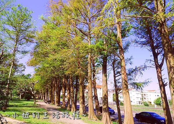 104 宜蘭落羽松 羅東運動公園落羽松 2016 2017 2018 2019 2020 2021 2022.jpg