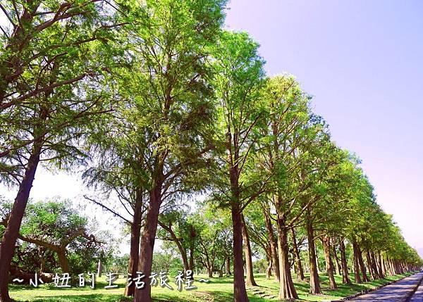105 宜蘭落羽松 羅東運動公園落羽松 2016 2017 2018 2019 2020 2021 2022.jpg