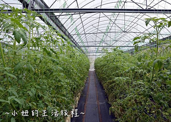 70新竹關西親子景點  金勇DIY 蕃茄農場 親子DIY  新竹休閒農場.JPG