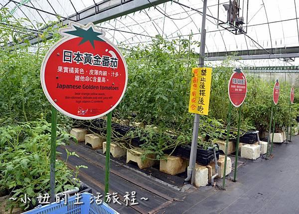 76新竹關西親子景點  金勇DIY 蕃茄農場 親子DIY  新竹休閒農場.JPG