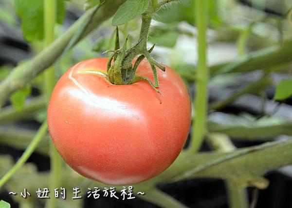 77新竹關西親子景點  金勇DIY 蕃茄農場 親子DIY  新竹休閒農場.JPG