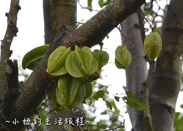 116 新竹關西親子景點  關西仙草博物館 仙草DIY   親子休閒農場.JPG
