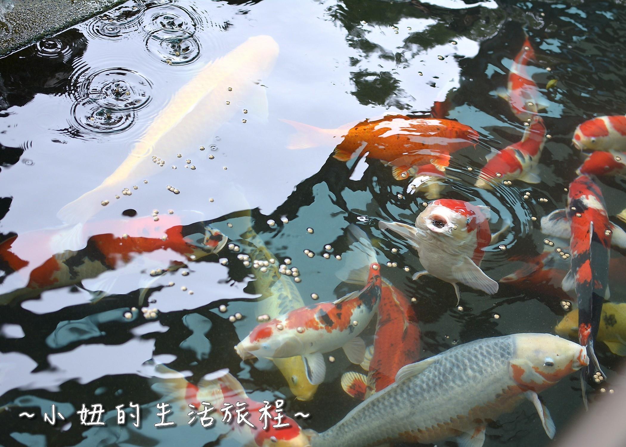 81 淡水民宿 日光行館 淡水高級民宿 淡水下午茶 .jpg