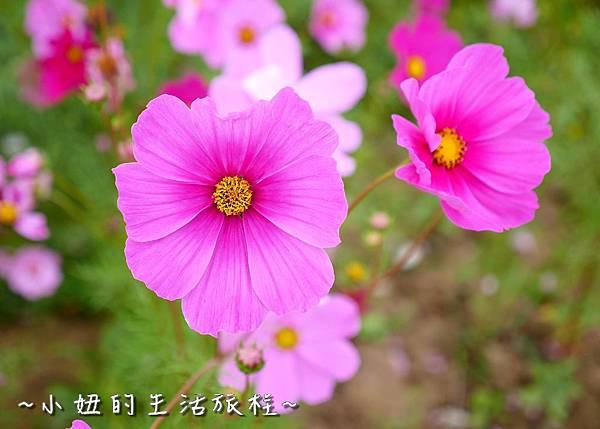 雲林 珍粉紅城堡P1150379.jpg