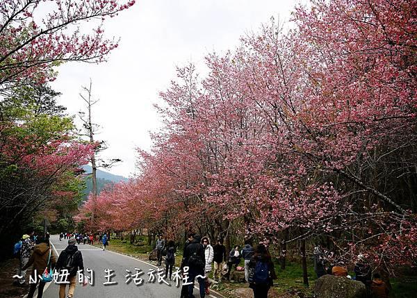 武陵農場 2017 櫻花季P1170558.jpg