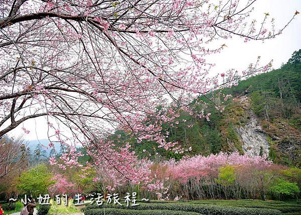 武陵農場 2017 櫻花季P1170676.jpg
