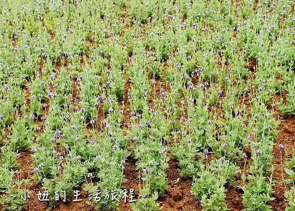 2017桃園農業博覽會P1220634.jpg