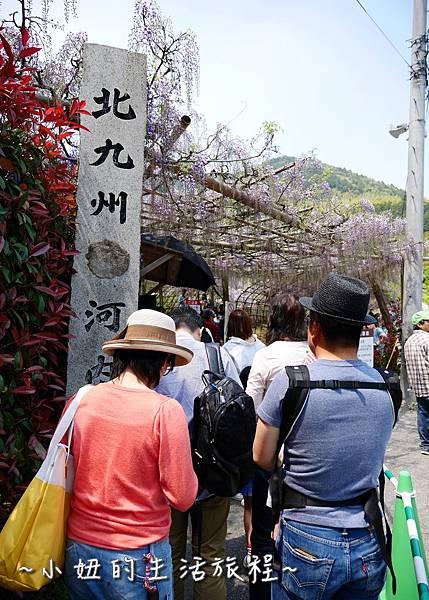 日本 九州 河內紫藤花P1240723.jpg